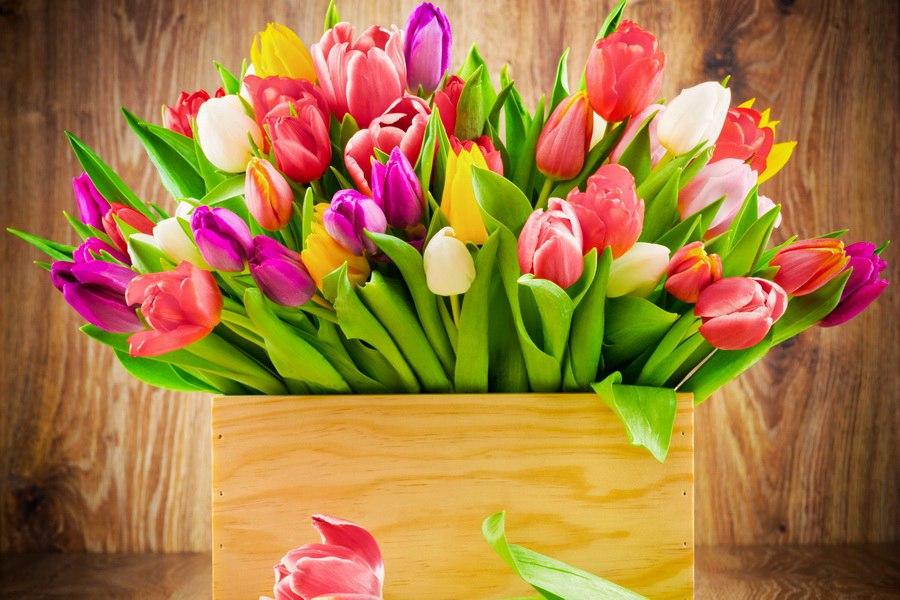 Купить цветы луковицы тюльпанов и других цветов заказ цветов по каталогу